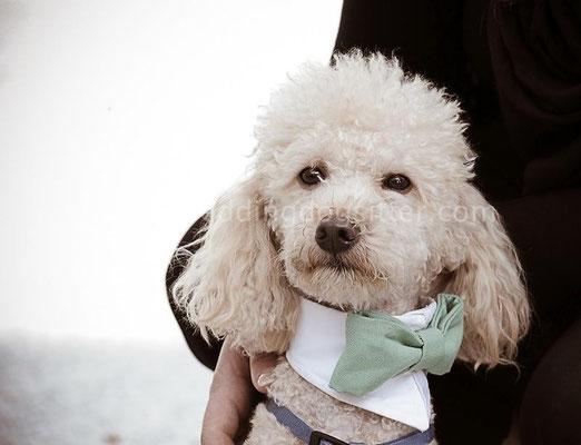 MATRIMONIO WEDDING DOGS SITTER CASERTA