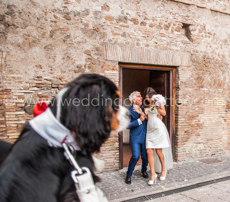 WEDDING DOG SITTER ELISA GUIDARELLI