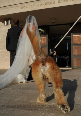 MATRIMONIO WEDDING DOGSITTER ROMA CASALI TEA