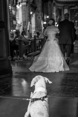 MATRIMONIO WEDDING DOG SITTER ROMA  TENUTA DI RIPOLO