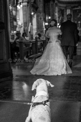 MATRIMONIO WEDDING DOG SITTER ROMA  TENUTA DI RIPOLO