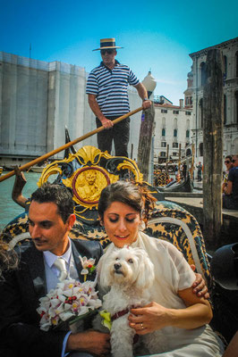 WEDDING DOG SITTER VENEZIA