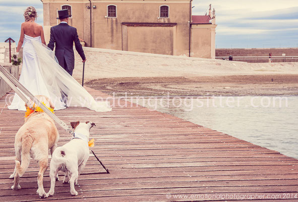 LABRADOR RETRIEVER AT WEDDING IN VENICE