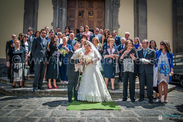 WEDDING DOG SITTER NAPOLI SORRENTO VILLA CLERMONT
