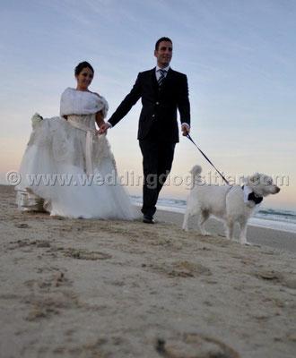 MATRIMONIO WEDDING DOG SITTER  PESCARA