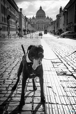 CANE AL MATRIMONIO A ROMA DOG SITTER