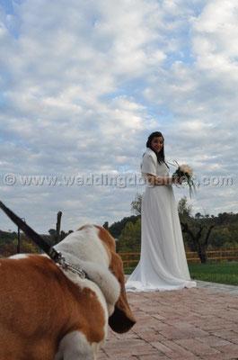 MATRIMONIO WEDDING DOG SITTER  MONTEROTONDO