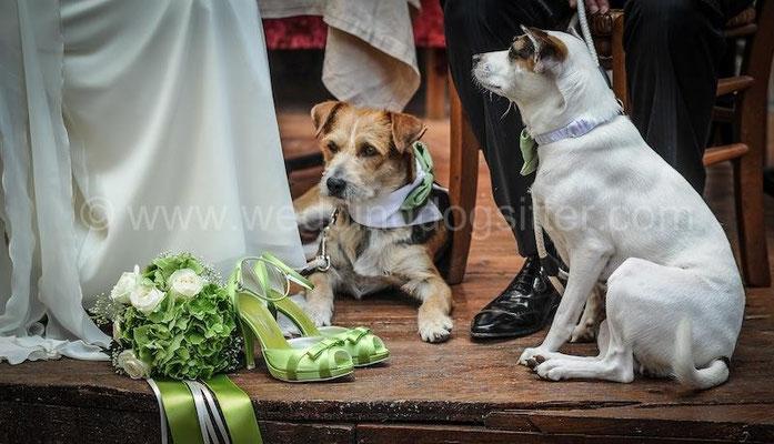 TEMA MATRIMONIO VERDE MELA CANI AL WEDDING  TOR DE SORDI