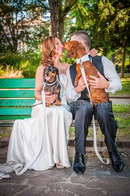 IL CANE AL MATRIMONIO WEDDING DOGSITTER MODENA