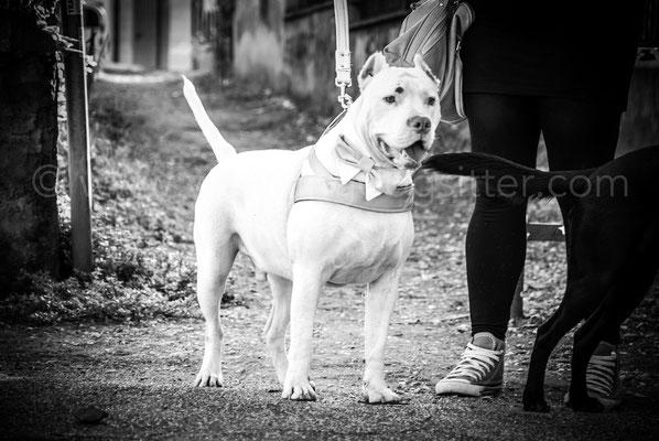 CANE AL MATRIMONIO CON LA WEDDING DOG SITTER ROMA