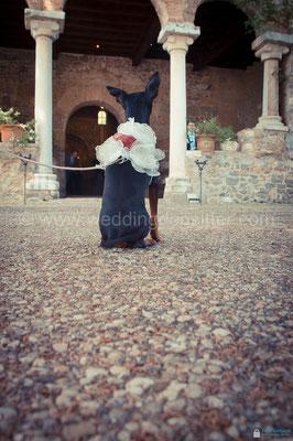 JUST MARRIED WEDDING DOG SITTER ROMA TENUTA SAN LIBERATO BRACCIANO
