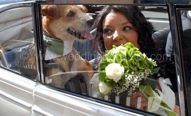 SPOSINA MAGGIOLINO BIANCO WEDDING DOG  TOR DE SORDI