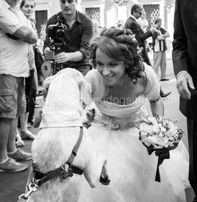 MATRIMONIO WEDDING DOG SITTER VERDE  TENUTA DI RIPOLO
