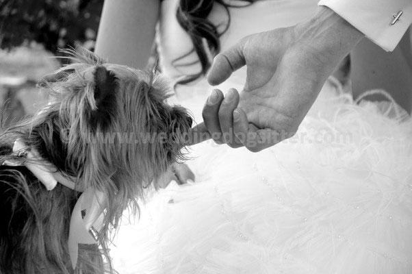 MATRIMONIO WEDDING DOG SITTER FIRENZE