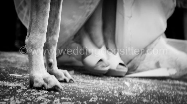 MATRIMONIO WEDDING DOG SITTER ROMA LOCATION TENUTA DI RIPOLO