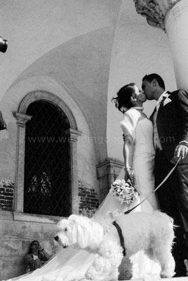 WEDDING DOGSITTER PER CANE SPOSI VENEZIA