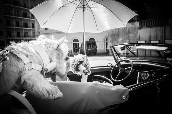 SPOSA CON IL CANE NAPOLI WEDDING DOGS