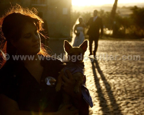 MATRIMONIO WEDDING DOG SITTER  FROSINONE