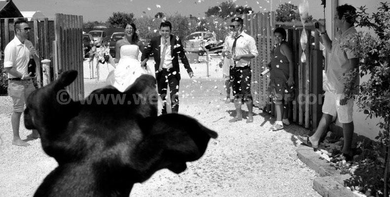 MATRIMONIO WEDDING DOG SITTER FANO PESARO URBINO