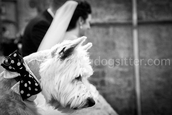 Foto dal punto di vista del cane al matrimonio