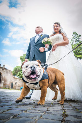 CANE AL MATRIMONIO A ROMA WEDDING DOG SITTER