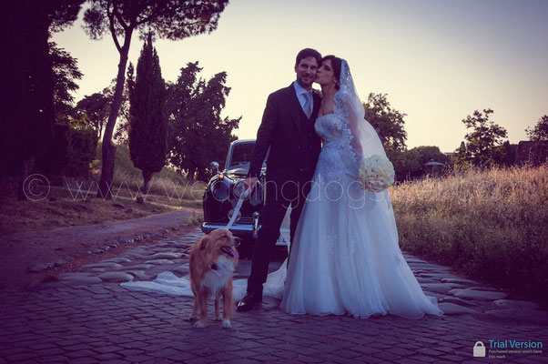 SPOSARSI CON IL CANE A ROMA WEDDING DOG SITTER
