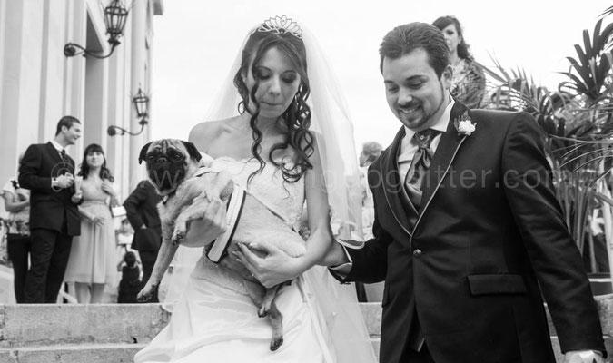 SPOSI CON IL CANE WEDDING DOG SITTER MESSINA