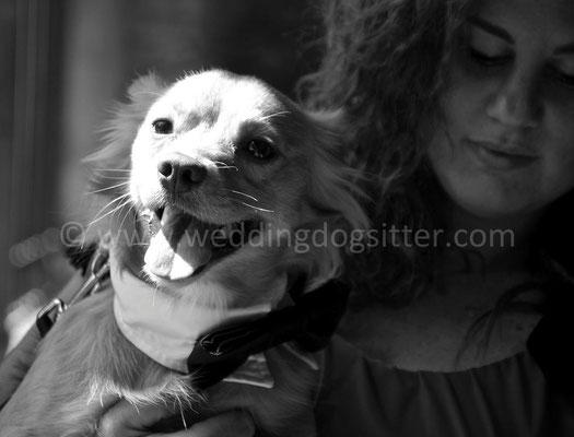 MATRIMONIO WEDDING DOG SITTER ROMA RESIDENZA CASTEL VERDE