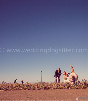 MATRIMONIO PALERMO CON IL CANE WEDDING DOG SITTER