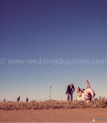 MATRIMONIO PALERMO CON IL CANE WEDDING DOG SITTER