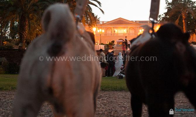 VILLA LA LIMONAIA WEDDING DOG SITTER PER GLI SPOSI CHE HANNO IL CANE