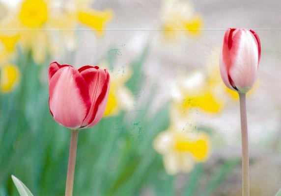 落ちこぼれ 春色