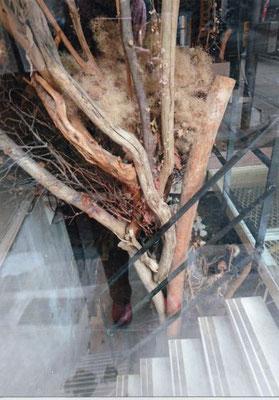 エクスペリヤ  枯木のオブジェ