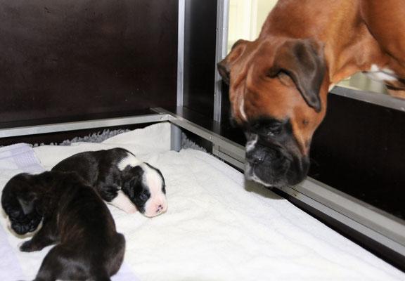 Besuch von Tante Amy: Hallo Babys...