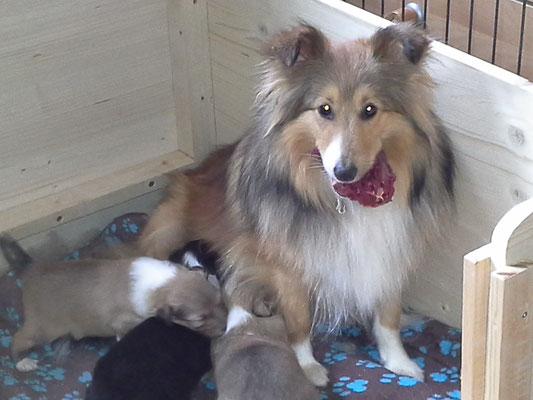 Mama Hermine meint es ist Zeit für feste Nahrung