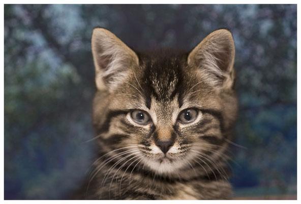 Büchele Reinhard - Katze