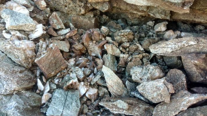 Bergkristalle im Schutt