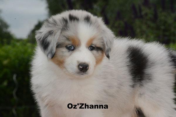 Oz'Zhanna