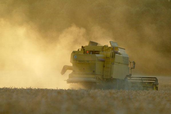 Erntemaschine mit Abendsonne - © Dirk Brzoska