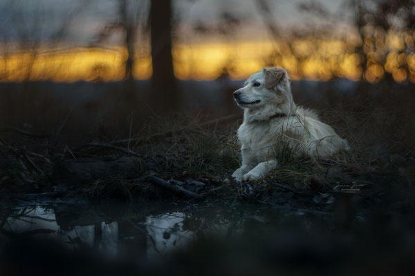 Ein Abend an der Wasserstelle im Wald, März 2018