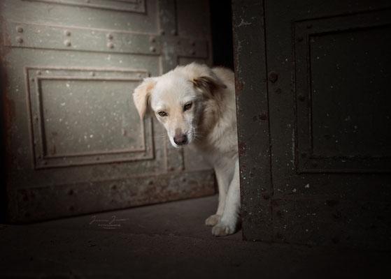 Dieses Foto symbolisiert den Schritt in die Freiheit. Aus einem rumänischen Tierheim, in ein neues Leben.