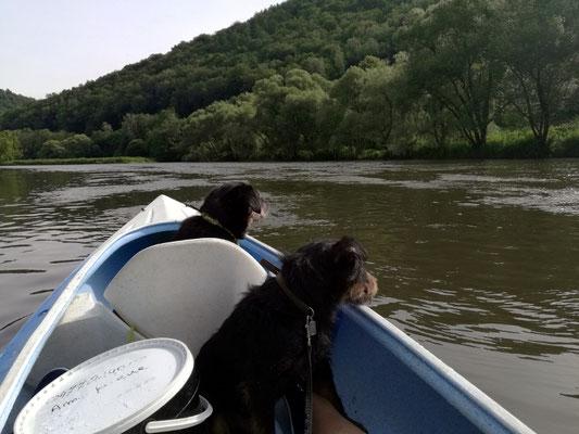 Auch die Hunde genießen die Fahrt