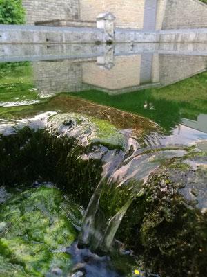 Die Quelle der Semois noch ganz zart auf ihrem Weg in die Ardennen
