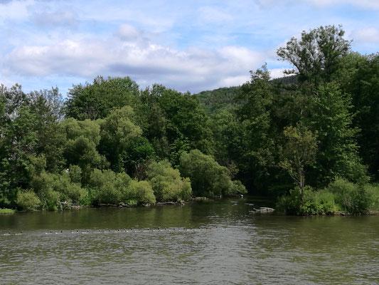 Die Mündung der Semois in die Maas.
