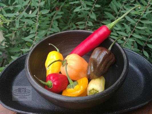 Verschiedene Chilisorten