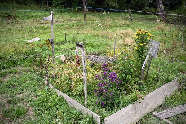 Jardin Le chant des plantes de Virginie Monbrun