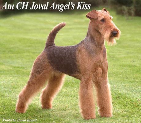 прабабушка: Joval Angel's Kiss
