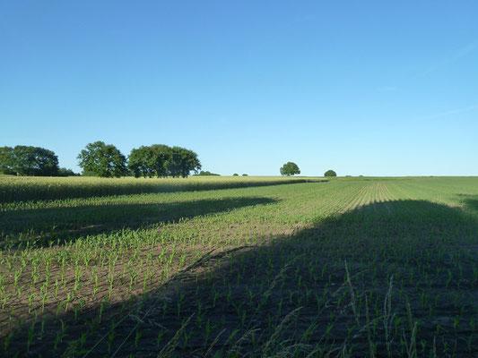 Felder bis zum Horizont