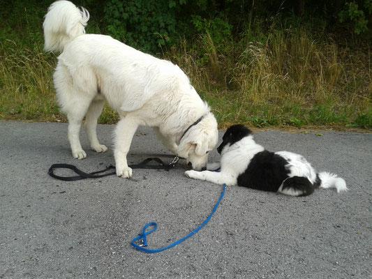 ...große Freundschaft...