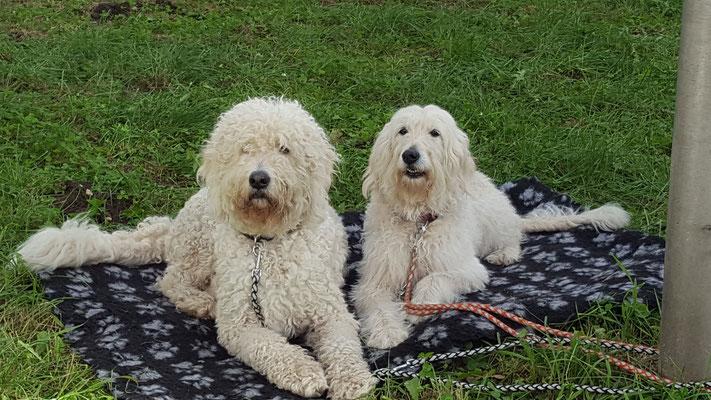 Bümi und Madlock warten geduldig an Frauchens Tiertafelstand